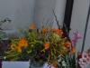 swieto-kwiatow_46